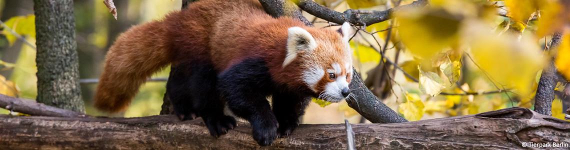 Zoo Berlin Eintritt Kind Zoo Tierpark Aquarium Erlebnisangebote